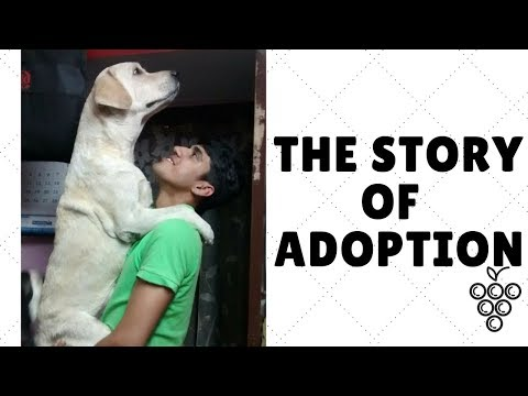 HOW TO ADOPT A LABRADOR IN INDIA | Wildly Indian