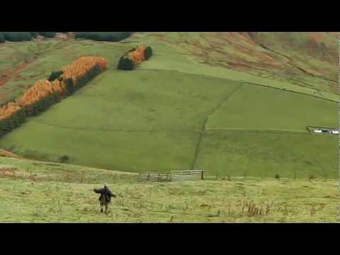 Harris Hawk chasing rabbit