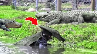 Guy Puts On an Alligator Costume and Swims in Alligator Pool , This Happened Next !