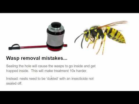 3 common DIY pest control mistakes | Bug Bully Pest Control, Grafton Ma