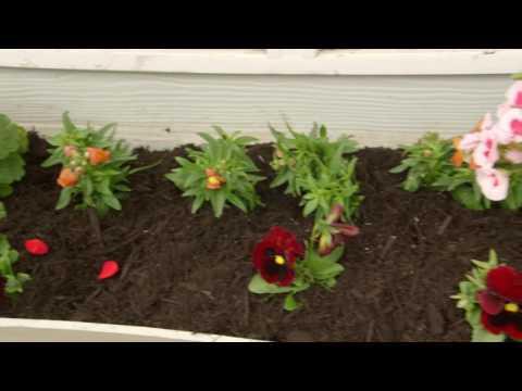 Quick Tip 3 Annuals vs Perennials