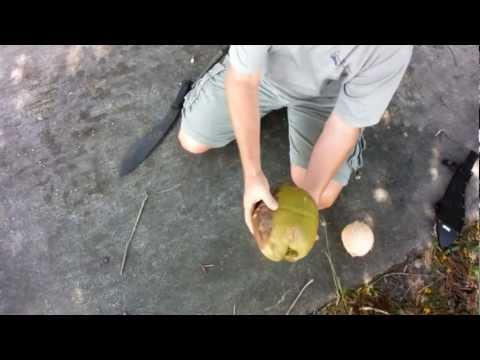 Removing the Husk from a Coconut