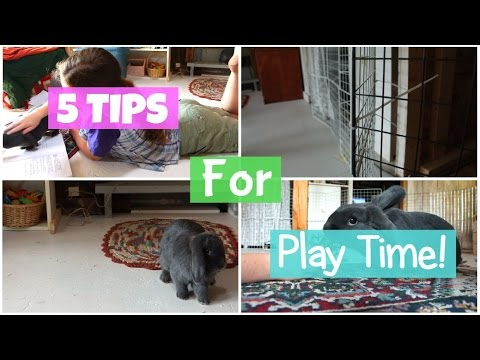 5 Tips for Rabbit Playtime! - HOW TO INTERACT/BOND WITH YOUR BUNNY