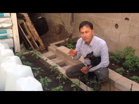 John Kohler Demonstrates How To Enhance Plant Growth By Doubling Miniature Greenhouses