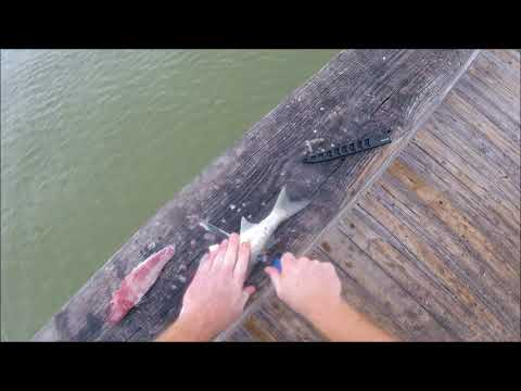 How To Cut Up Mullet To Use For BAIT!