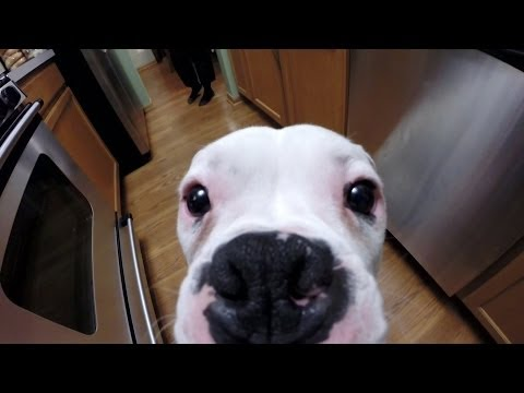 GoPro: A Day In The Life Of My Dog Bruno
