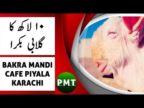 10 LAKH Ka Gulabi Bakra | Bakra Mandi Piyala Hotel Karachi | Live with Aijaz Riaz Mastoi | Eid 2018