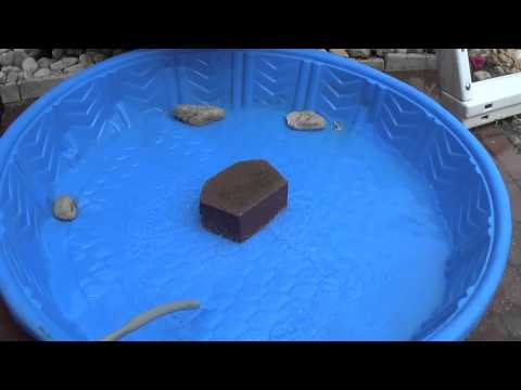 How to make a Pet Turtle Pool