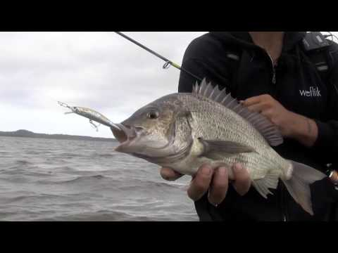 Fishing Bream With Hard Body Lures | Sydenham Inlet