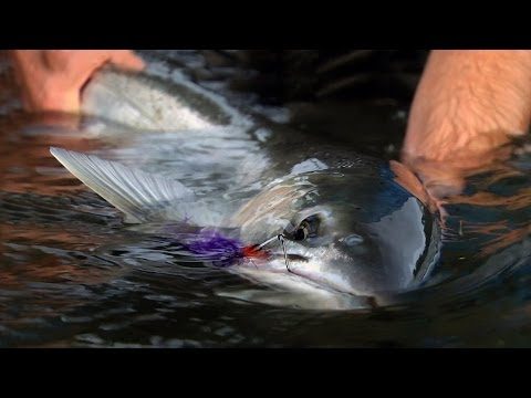 WINTER RUN by Todd Moen - Pacific Northwest Winter Steelhead Fly Fishing