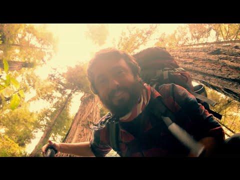 Redwoods: Best Hiking Trails