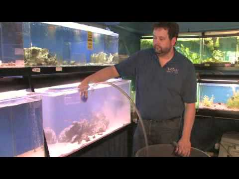 How to Clean Sand in a Fish Tank