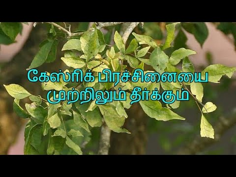 Home remedy for gastric ulcer (in Tamil)