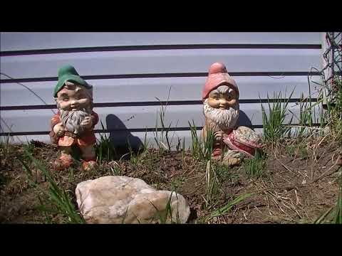 Happy Mothers Day Gnomes