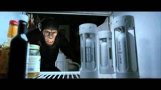მაიმუნების პლანეტის აჯანყება