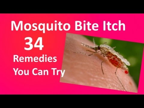Mosquito Bites - Stop the Itch