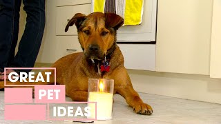 How To Treat A Dog With Fire Phobia | Pets | Great Home Ideas