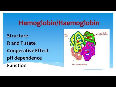 Hemoglobin - Comprehensive Overview
