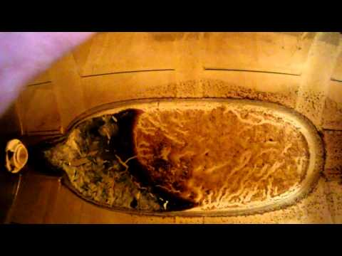 Where Does Brewers Yeast Come From?