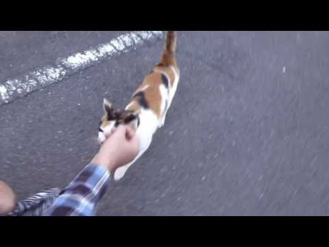 Another friendly Japanese stray cat I met while out walking