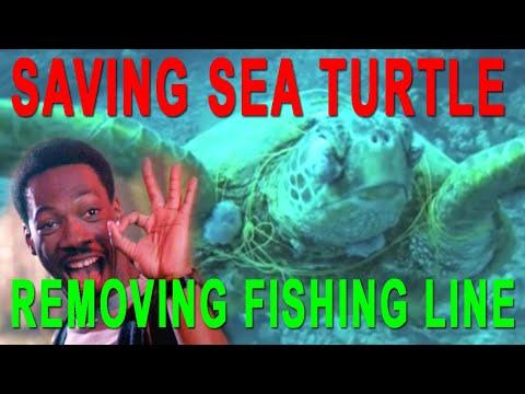 Rescue a Hawaiian Green Sea Turtle in Oahu- Scuba Dive Hawaii and Save a Turtle