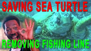 Rescuing a Hawaiian Green Sea Turtle- Scuba Dive Hawaii and Save a Turtle