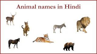 Animal Names in Hindi
