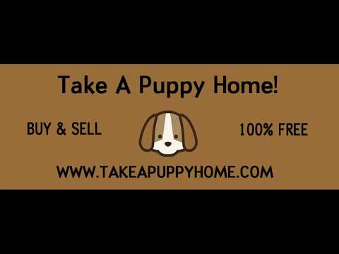 The Best Place To Buy & Sell Puppies/Dogs Online! TakeAPuppyHome.Com
