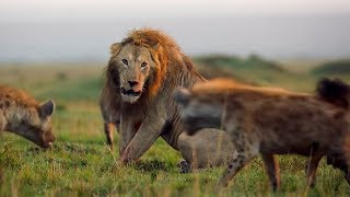BBC Earth's Best Of The Decade   BBC Earth