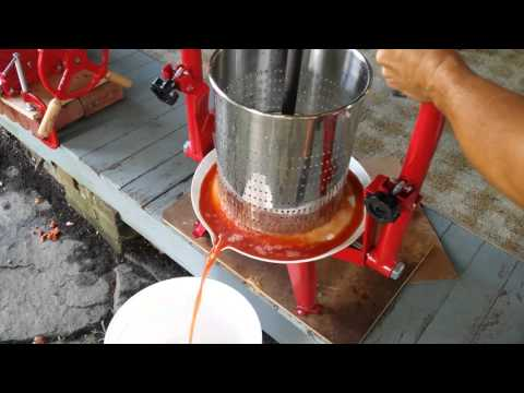 Juicing Apples in TSM Harvest Fruit and Wine Press
