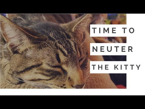 Rescued Kitten Will Be Neutered Today   Pet Vlog