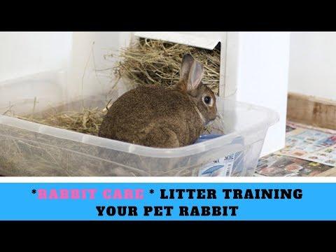 *Rabbit Care * Litter Training Your Pet Rabbit