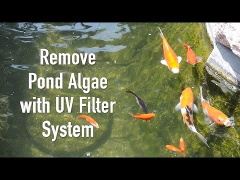 Remove Pond Algae with UV Filter System