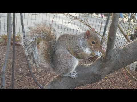Manhattan Square Park Squirrel