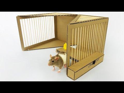 DIY Simple Rat Trap from Cardboard