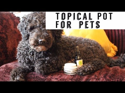 Topical Marijuana For Dogs and Cats