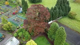 The English Nursery Garden Year...Week 42