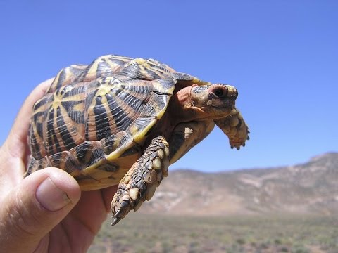 Find out where the most tortoise species are in the world!