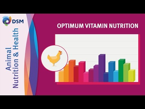 Optimum Vitamin Nutrition (OVN™) by DSM in Animal Nutrition and Health