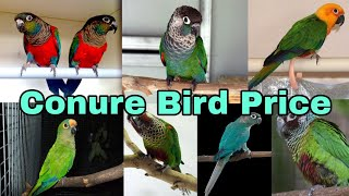 Exotic Birds (YSC & Pineapple) conure For Sale & Give Away