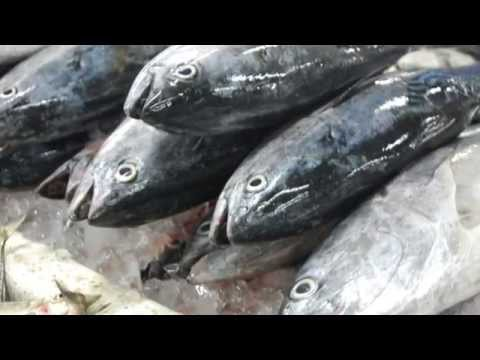 How to make your own organic fish fertilizer