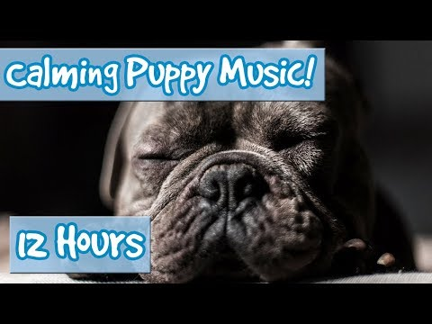 How to Calm Your Puppy Down! Ways to Relax Your Dog with Soothing Music and Calming Sound Effects!🐶