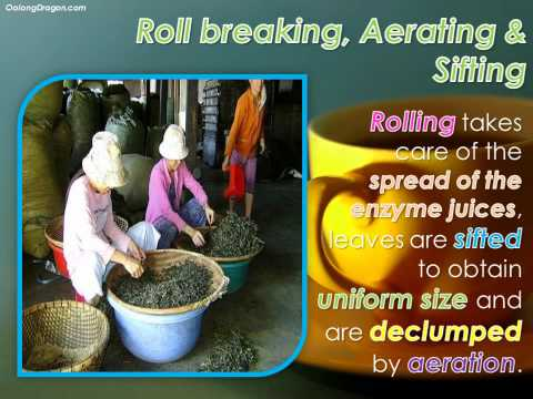 Uncovering the Journey of a Black Tea - from Raw Leaf to a Tea Cup