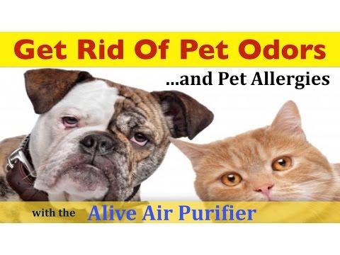 Pet Odor Air Purifier