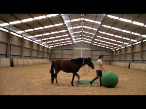 Breaking a horse in 3 DAYS; Scotch