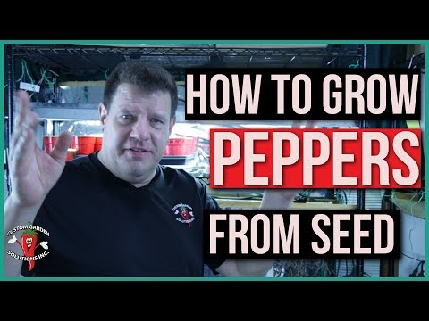 How to Grow Pepper Plants  From Seed Indoors - For Transplant to Outdoor Garden