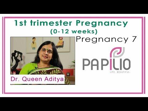 First Trimester Pregnancy (0-12 weeks). Pregnancy 7