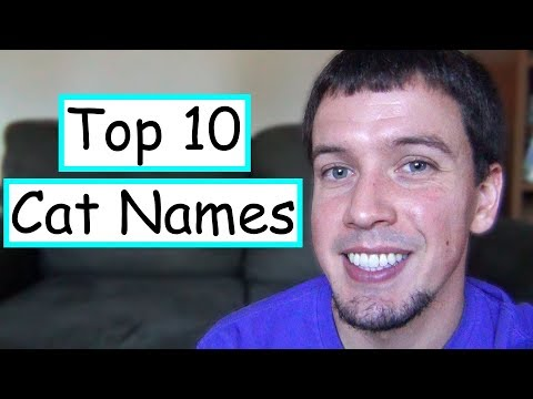 The Top 10 Cat Names in the United States!