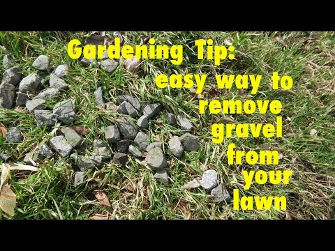 GARDENING TIP ● How to Easily Remove Gravel from your lawn