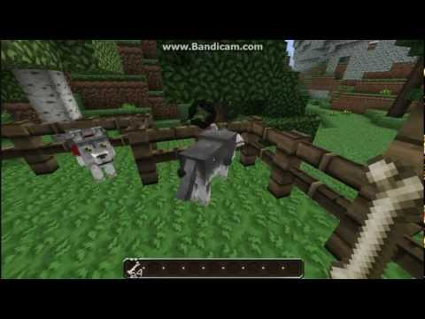 Minecraft: Taming Wolves and Ocelots